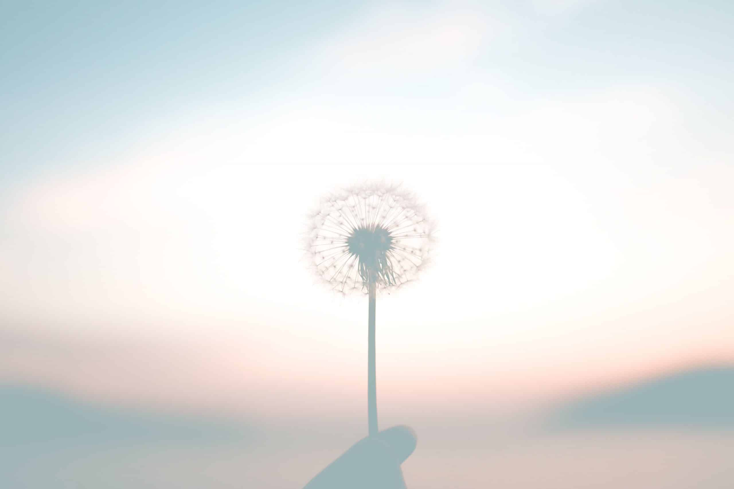 Eckhart Tolle Corona  Meditation Achtsamkeit Awareness Ängste
