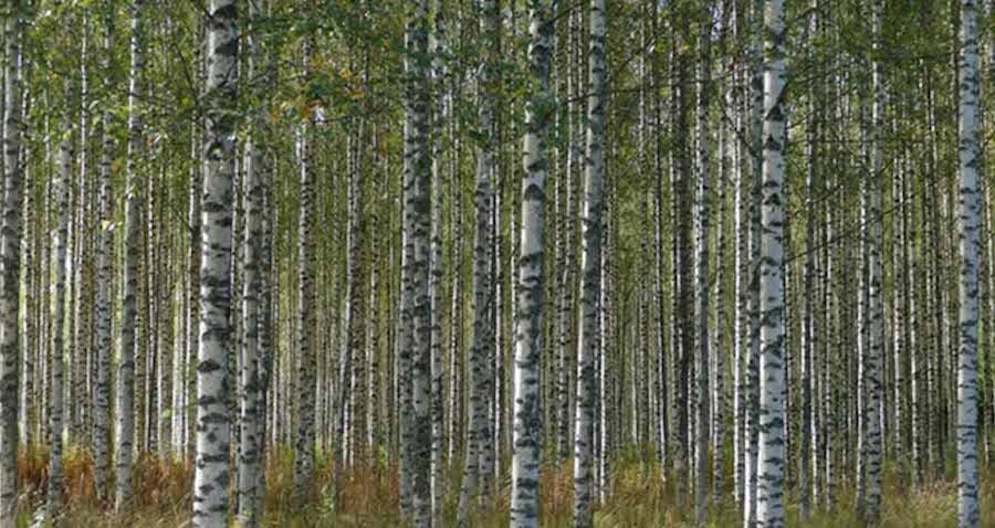 Wald, Nordeuropa